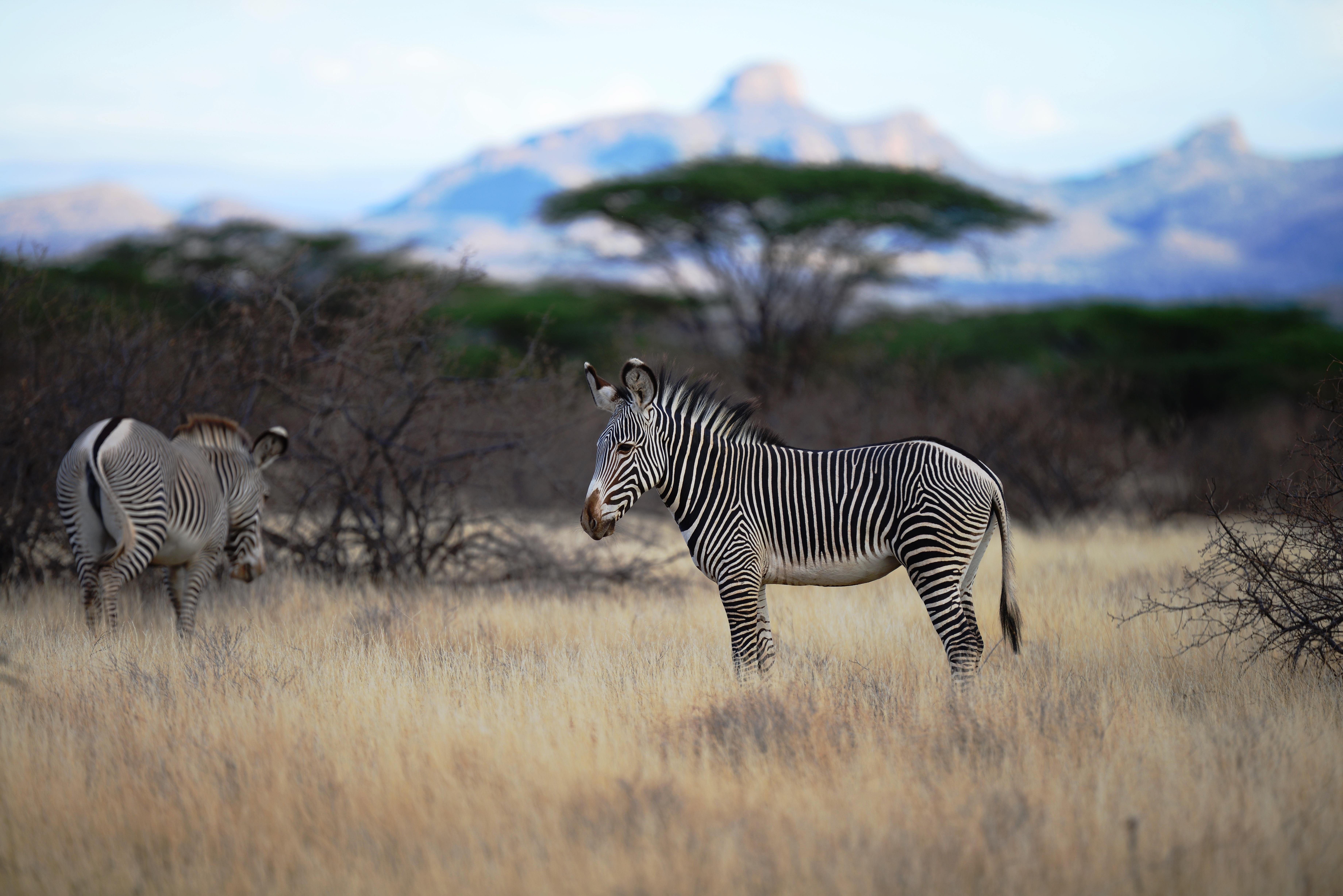 Kenya 1. Teil (10.- 16. Oktober 2012)