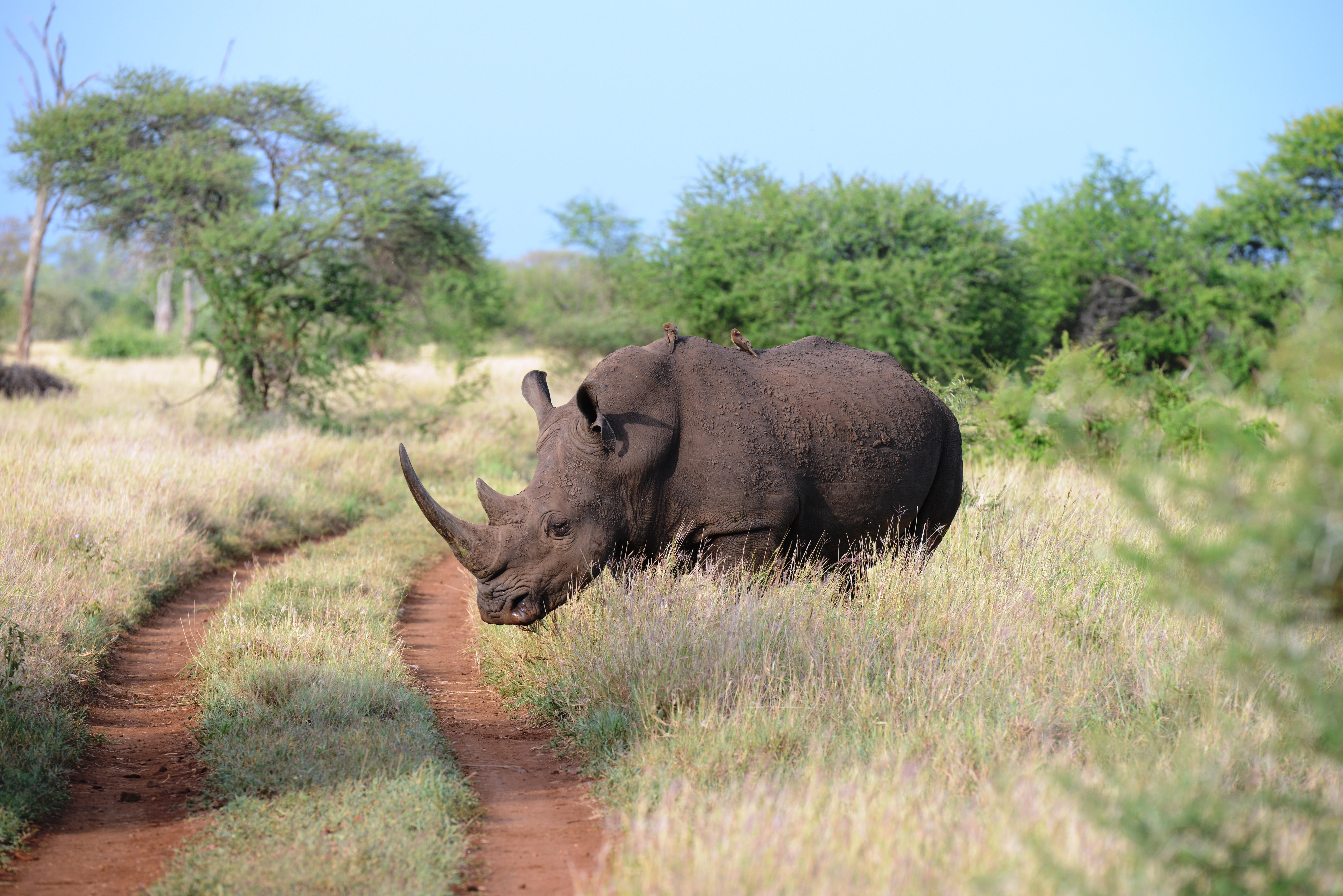 Südafrika 1. Teil (27. – 3. Dezember 2012)